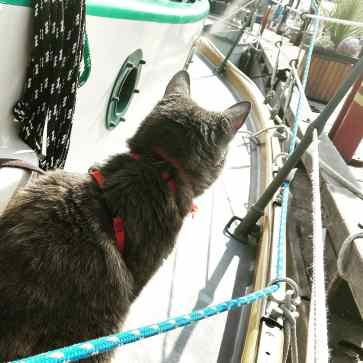 Momma Kitty checking out the docks at Ladysmith.