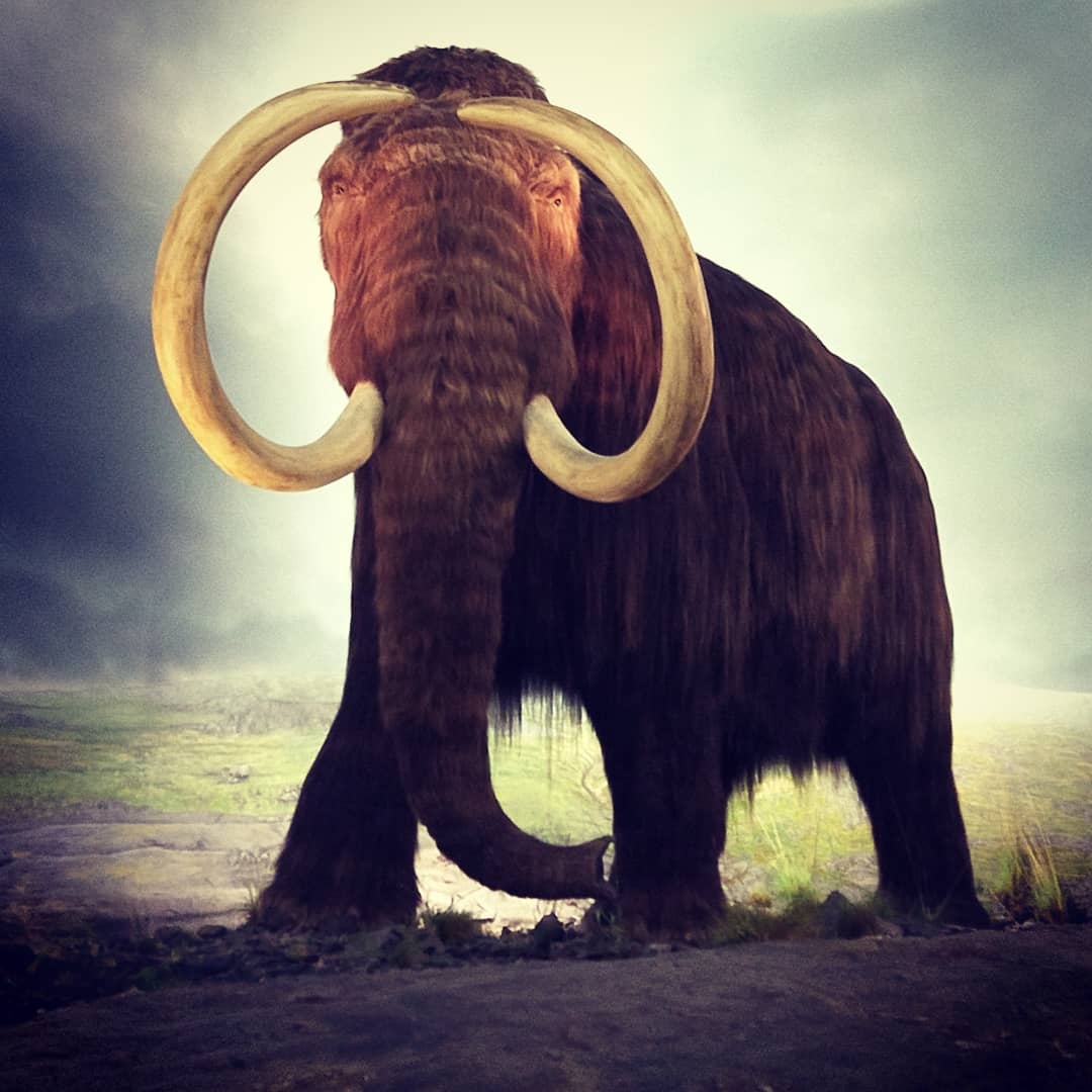 Wooly mammoth, Royal BC Museum.